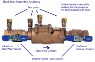 backflow_anatomy